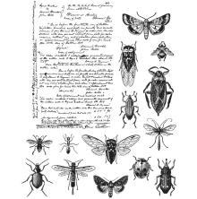 Tim Holtz Cling Stamps 7X8.5 - Entomology